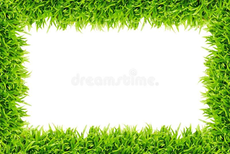 Feld des grünen Grases getrennt vektor abbildung