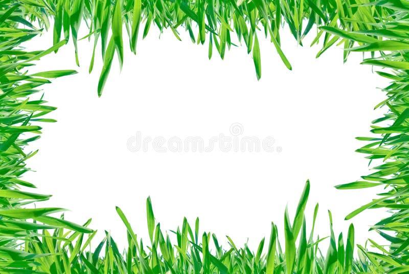 Feld des grünen Grases lokalisiert auf einem weißen Hintergrund. stockfoto