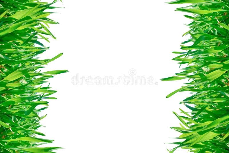 Feld des grünen Grases lokalisiert auf einem weißen Hintergrund. stockfotografie