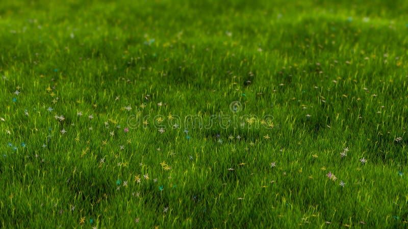 Feld des Grases lizenzfreies stockfoto