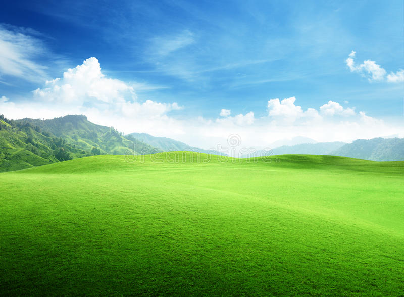 Feld des Grases im Berg stockfoto