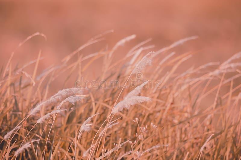Feld des Herbstgrases lizenzfreie stockfotos