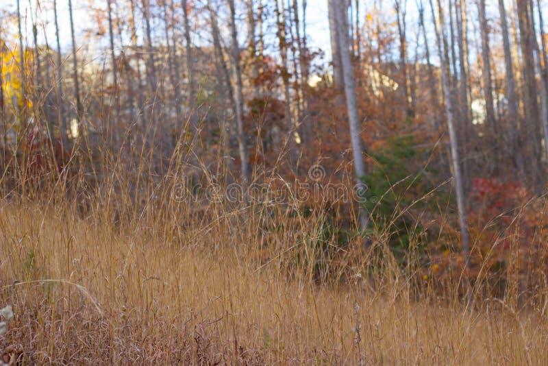 Feld des hohen Grases, während die Sonne einstellt stockfoto