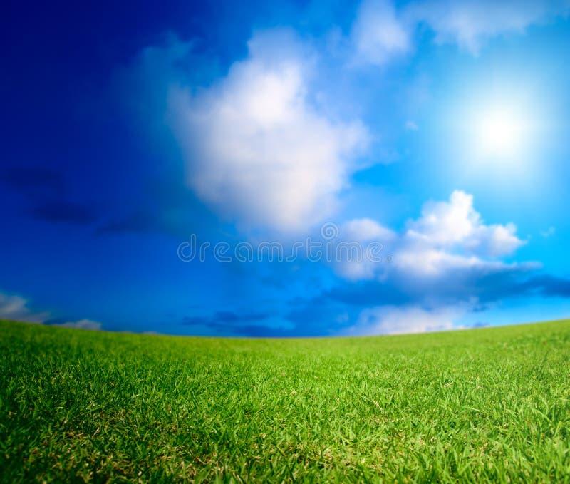 Download Feld des Sommergrases stockbild. Bild von wolken, szenisch - 9087311