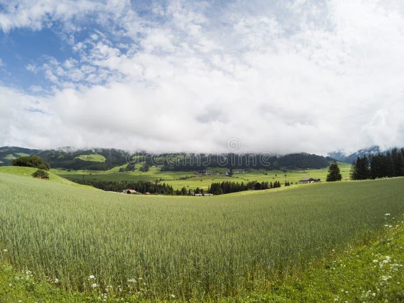 Feld des wachsenden Weizens mit schöner Ansicht über Landschaft von Dolomit moutains in den Wolken mit kleinen Häusern im Tal lizenzfreies stockbild