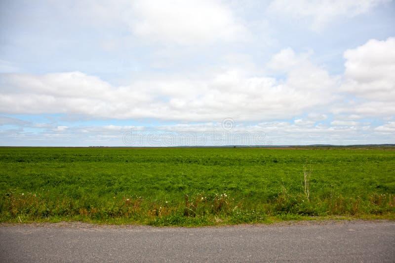 Feld durch einen Straßenrand stockfotografie