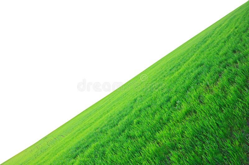 Feld eines grünen Grases lizenzfreie stockfotografie