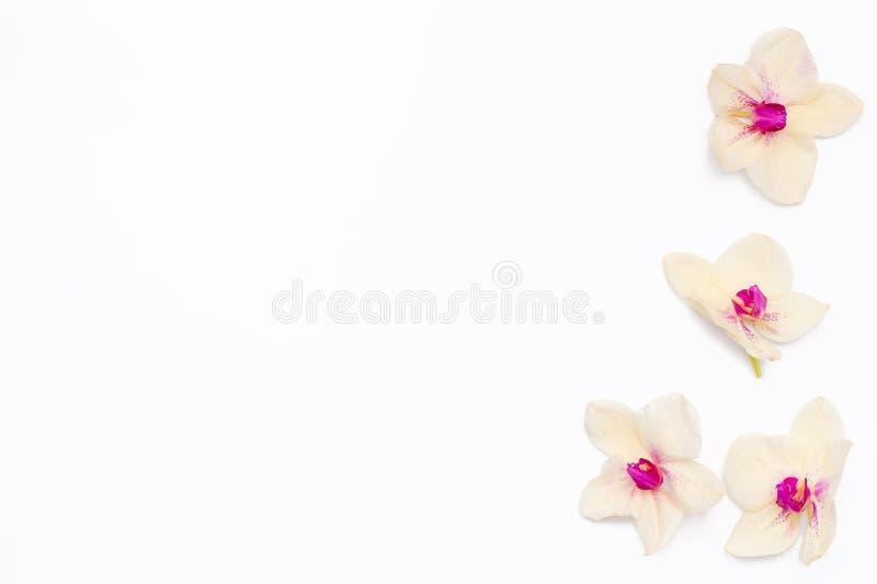 Feld für Text der Blumen der Orchideen auf der Seite stockfotografie