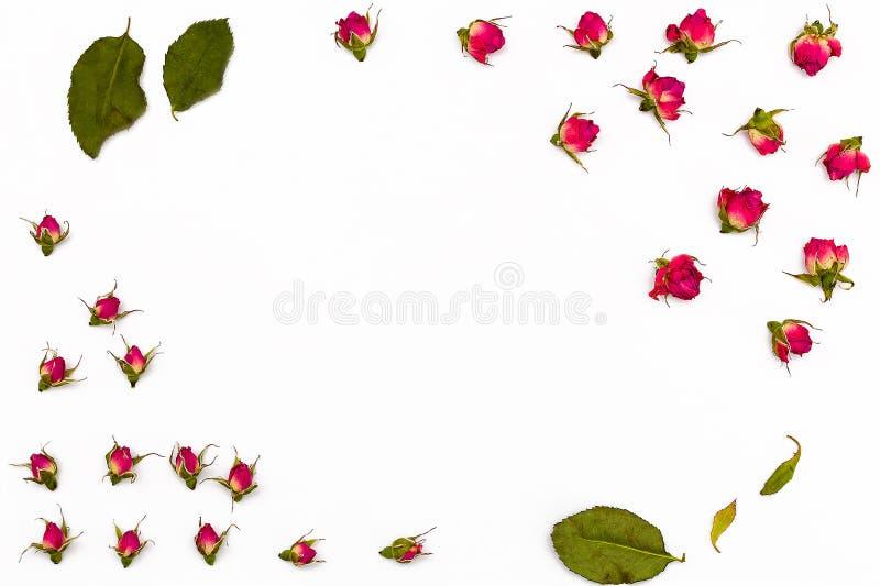Feld für Text von kleinem trocknen rosafarbene Blumen und Blätter auf einem weißen Hintergrund lizenzfreie stockfotos