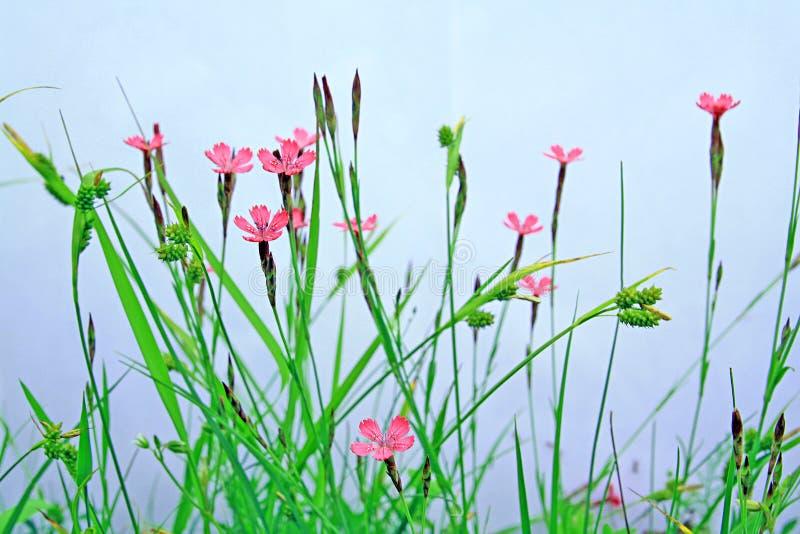 Feld flowerses lizenzfreie stockbilder