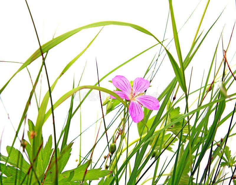 Feld flowerses stockbild