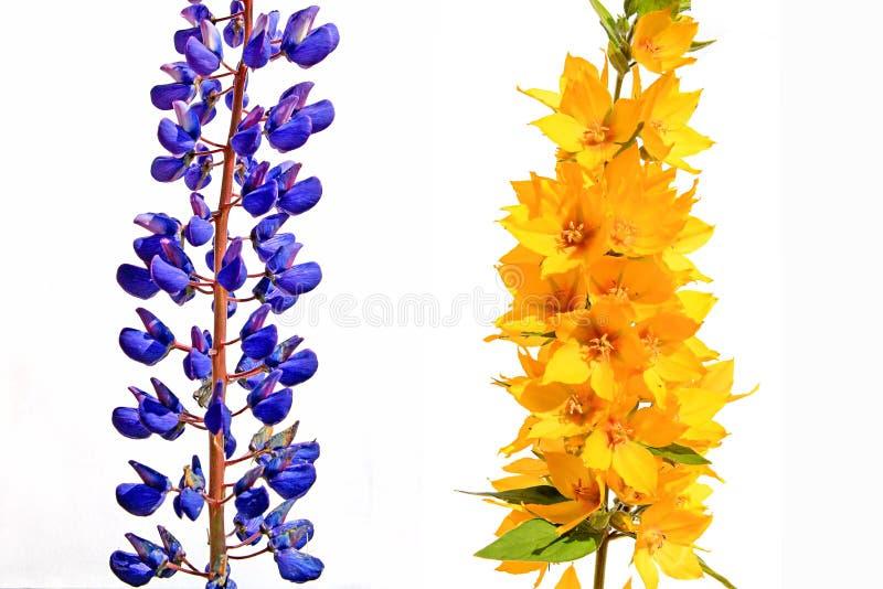 Feld flowerses lizenzfreie stockfotos