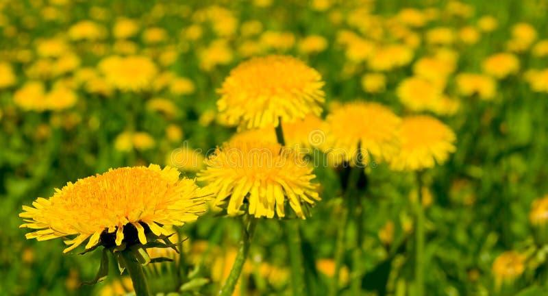Feld flowerses. lizenzfreies stockbild