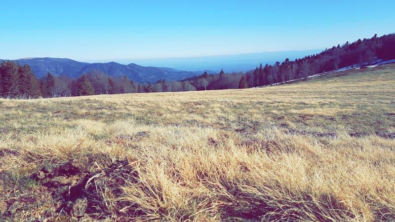 Feld-Gebirgshimmel-Waldspitze lizenzfreie stockfotos