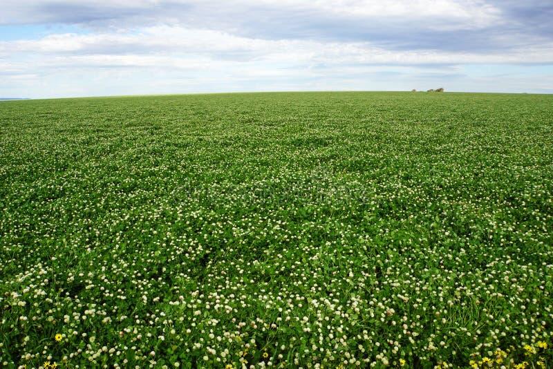 Feld gegen Himmel, die Landwirtschaft und Ackerland mit Himmel und Wolken in Victoria, Australien stockfotografie
