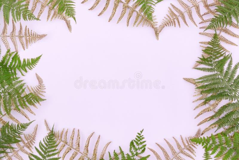 Feld gemacht von den grünen Blättern des goldenen Farns, Palmwedel auf hellem Hintergrund Abstrakter tropischer Blatthintergrund, lizenzfreie stockfotografie