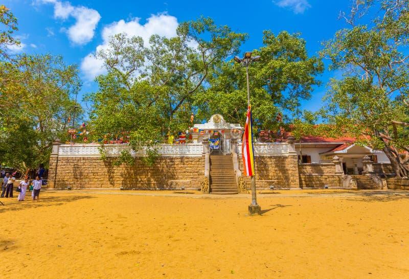 Feld H Anuradhapura Jaya Sri Maha Bodhi Tree stockbild