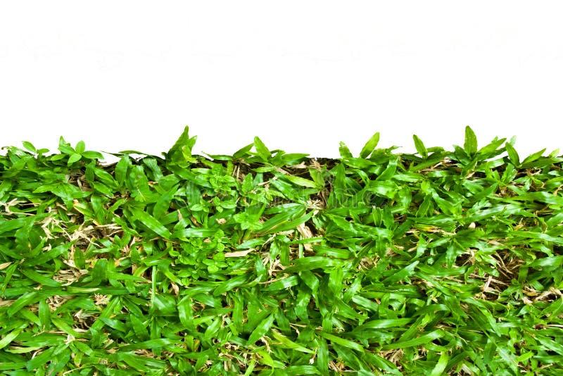 Feld Hintergrund mit dem grünen Gras, das auf weißem Hintergrund lokalisiert wird lizenzfreies stockbild
