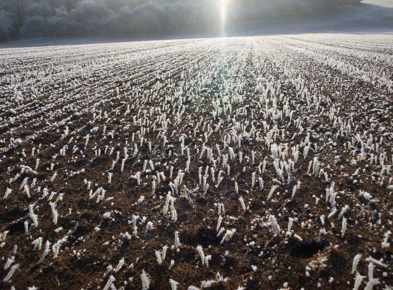 Feld im Winter lizenzfreie stockfotos