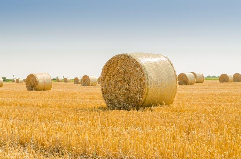 Feld med balen av sugrör arkivbild