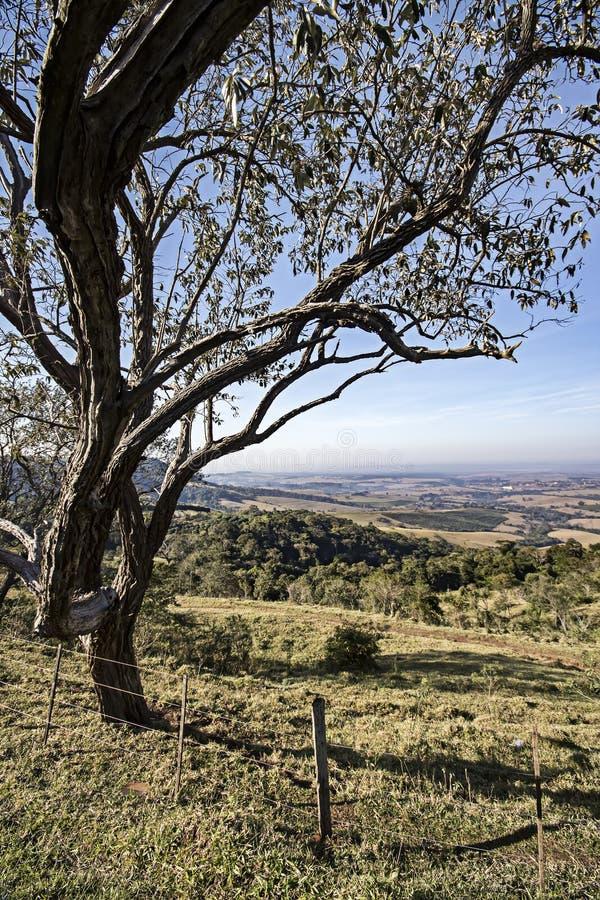 Feld mit Baum und Zaun an der Dämmerung lizenzfreies stockbild