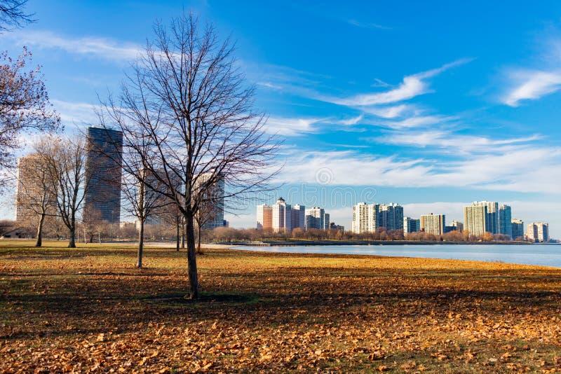 Feld mit bloßen Bäumen und gefallener Autumn Leaves am Pflegestrand in Edgewater Chicago stockfotografie