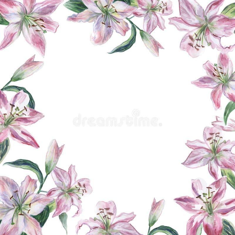 Feld mit den Rosa- und weißen Aquarell lilys vektor abbildung
