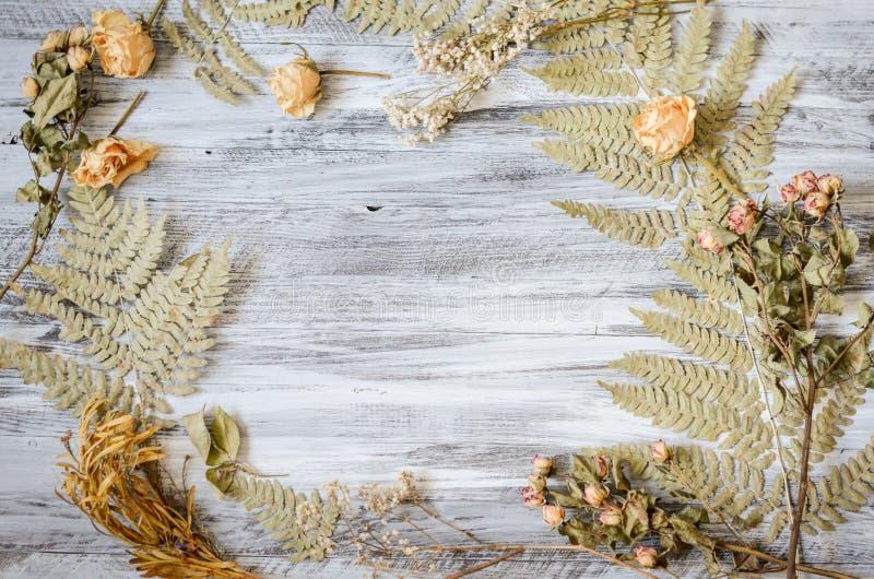 Feld mit Farnblättern, -rosen und -niederlassungen auf hölzernem Hintergrund lizenzfreie stockbilder