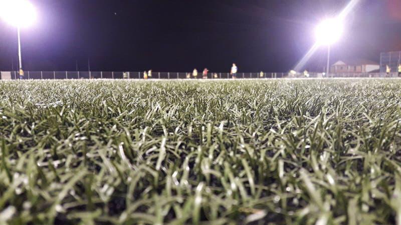 Feld mit Gras stockbild