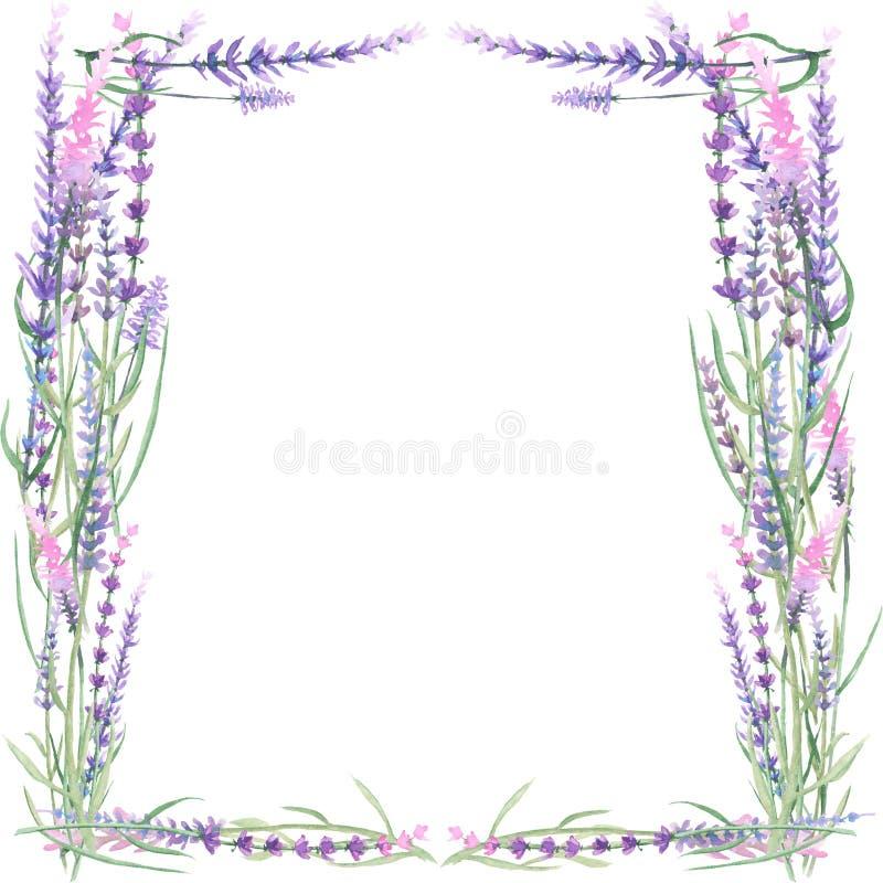 Feld mit Lavendel stock abbildung. Illustration von einladung - 55450582
