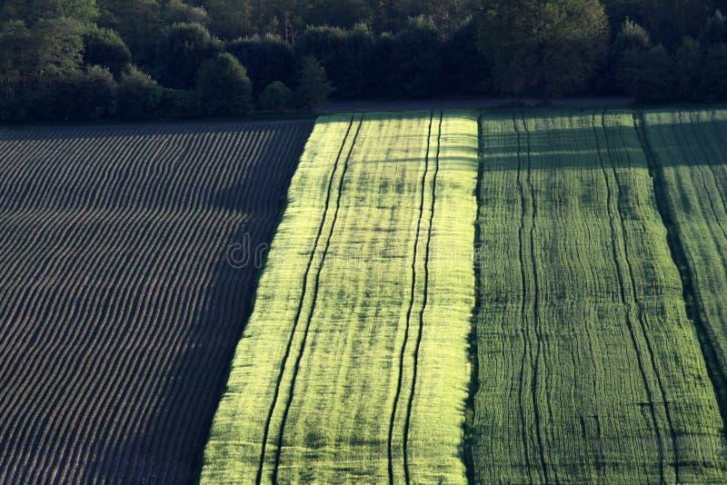 Feld mit Mais und Gerste stockbild