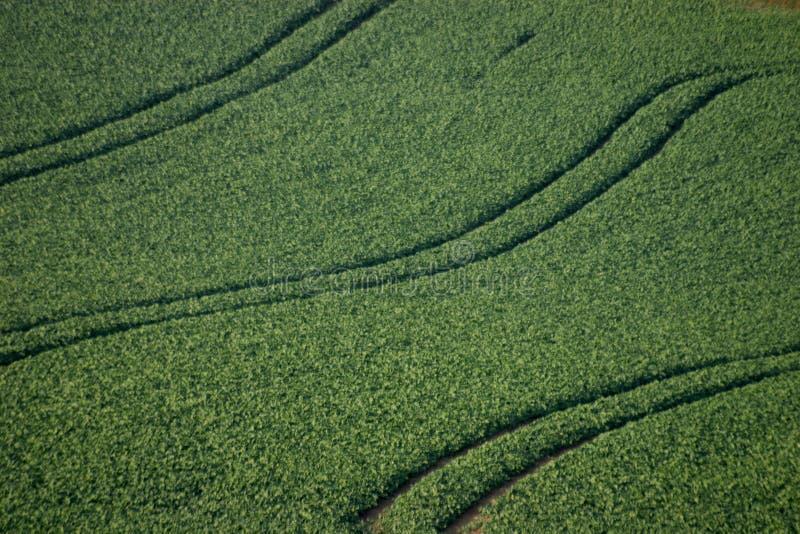 Feld mit Spuren stockbilder