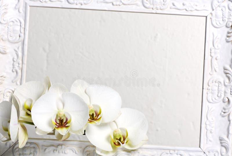 Feld mit weißen Orchideen stockfoto