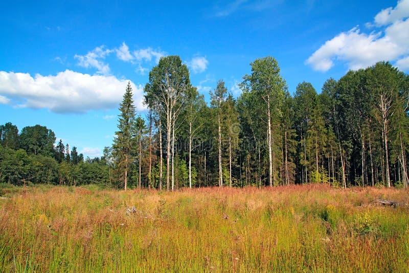 Feld nahe Holz stockbilder
