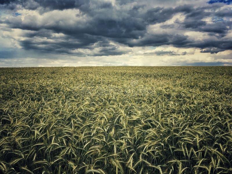 Feld in Polen lizenzfreies stockfoto