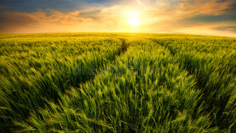Feld schleppt das Führen zu die untergehende Sonne lizenzfreies stockfoto