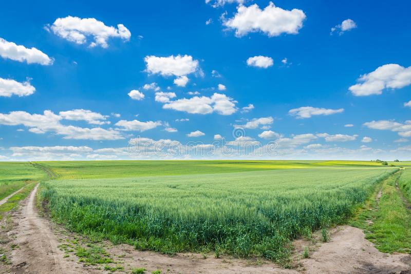 Feld in Ukraine stockfotos