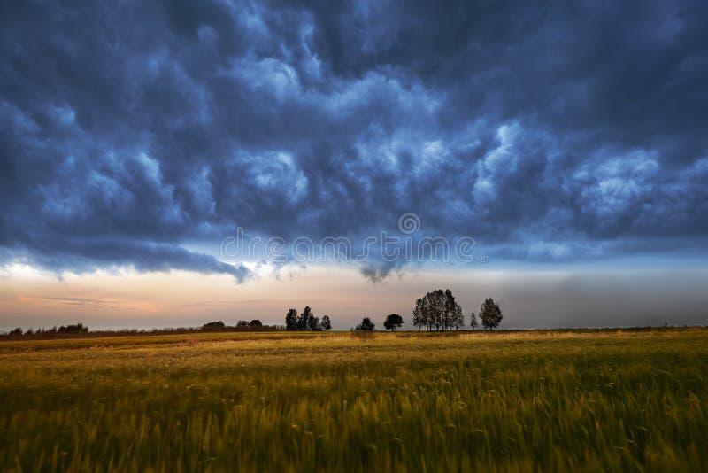 Feld und dunkle Wolken lizenzfreies stockbild