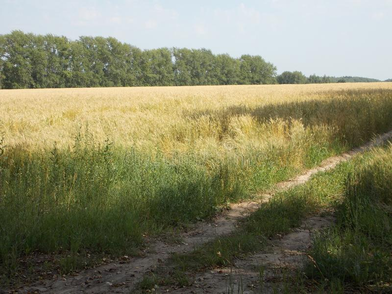Feld- und Gassenim juli Tag lizenzfreie stockbilder