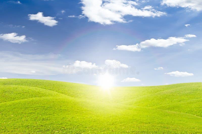 Feld und Sonnenuntergang des grünen Grases lizenzfreies stockbild