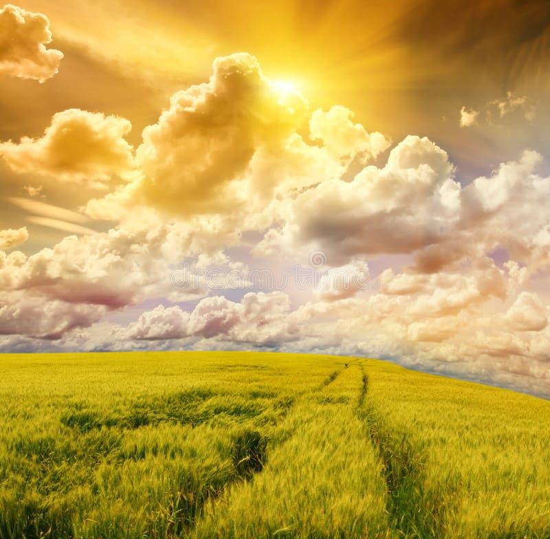 Feld und stürmischer Himmel lizenzfreies stockbild