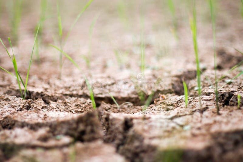 Feld und Trockenheit stockfoto