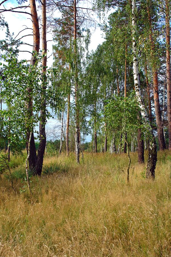 Feld- und Waldstadtrände lizenzfreies stockbild