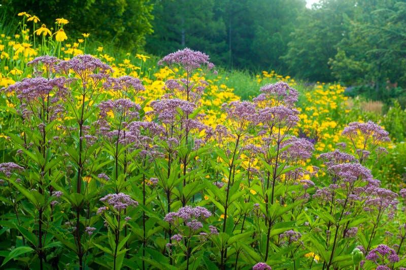 Feld von Blumen lizenzfreies stockfoto