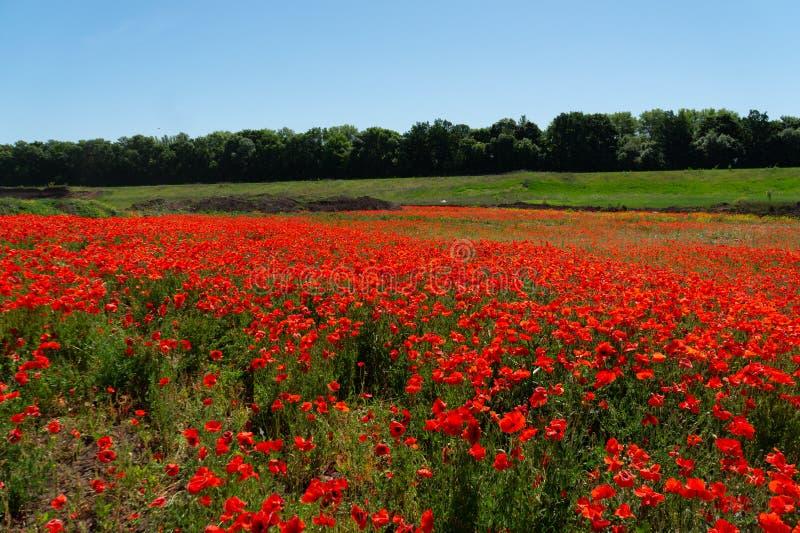 Feld von Blumen der roten Mohnblume Ukraine ist ein schöner Platz lizenzfreie stockfotografie