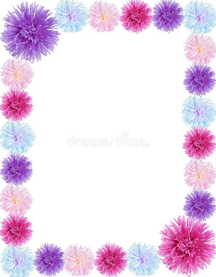 Feld von den Asterblumen lizenzfreies stockfoto