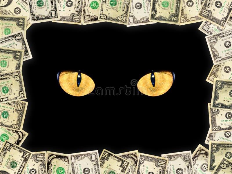 Feld von den Dollar und von den Katzenaugen in der Dunkelheit lizenzfreie stockfotografie