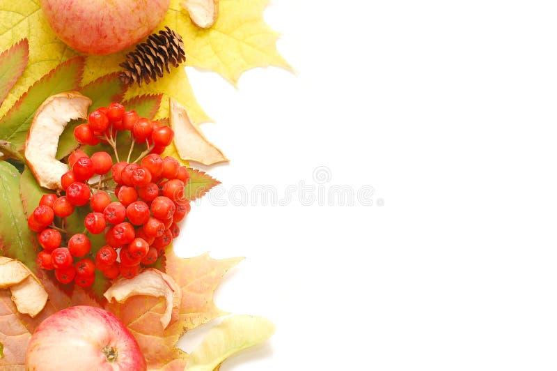 Feld von den Herbstblättern lizenzfreies stockfoto