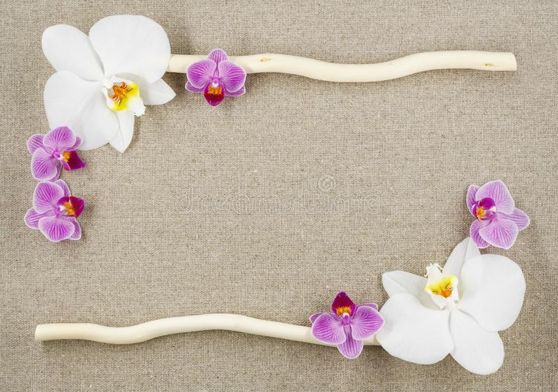 Feld von den Orchideen und von zwei Stöcken auf einem beige Gewebehintergrund stockbilder