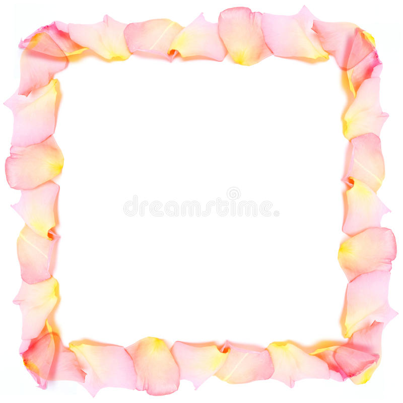 Feld von den rosafarbenen Blumenblättern stockfoto